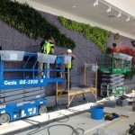 Installation of plants