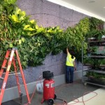 Live plants installed - green wall
