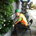 Installing plants