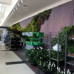plants for living wall